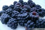 How To Grow And Care For Blackberries, How To Grow Blackberries, Care For BlackBerries
