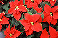 What Flowers Can You Plant In Winter,Flowers That Grow In The Winter