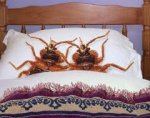 What Are Bedbugs, How To Tell If  You Have Bedbugs